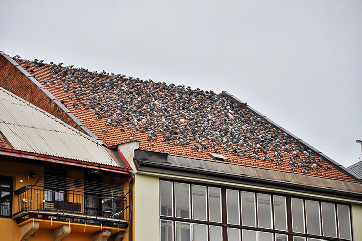 A2B Pest Control are able to install spikes to deter birds from roofs in Tewkesbury.