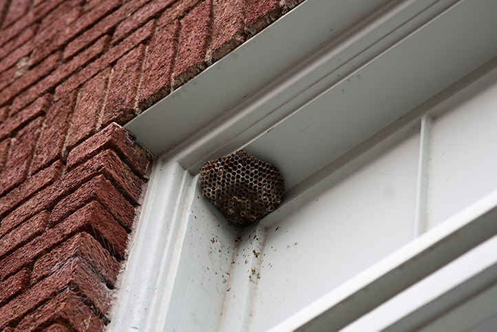 We provide a wasp nest removal service for domestic and commercial properties in Tewkesbury.